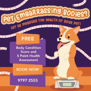 Embarrassing Bodies: Pet Edition Promo Poster